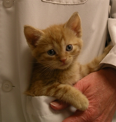 gallery-kitten-pocket