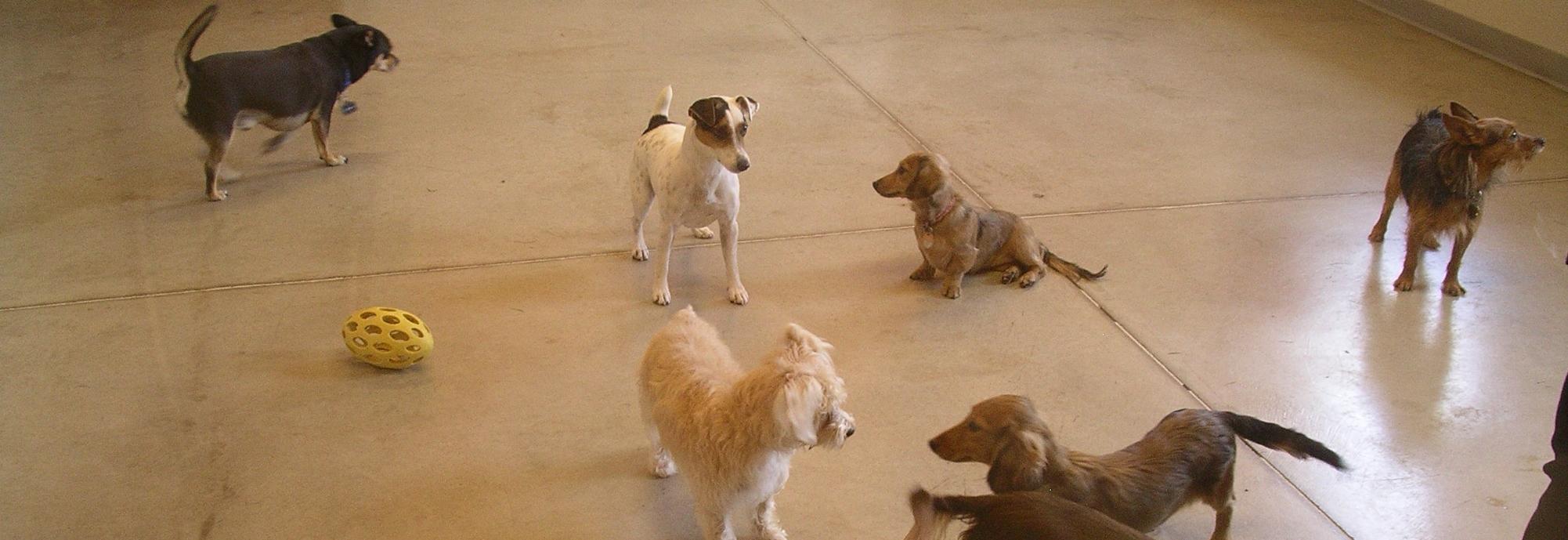 gallery-small-dogs-pr